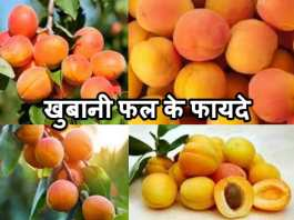 खुबानी फल के फायदे उपयोग| khubani fruit Khane Ke Fayade