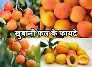 खुबानी फल के फायदे उपयोग  khubani fruit Khane Ke Fayade