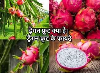 ड्रैगन फ्रूट क्या है| ड्रैगन फ्रूट के फायदे| Dragon Fruit Khane Ke Fayade In Hindi