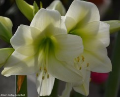 dsc_5453-haverhill-ghaa-nunans-parrot-plants-and-painters