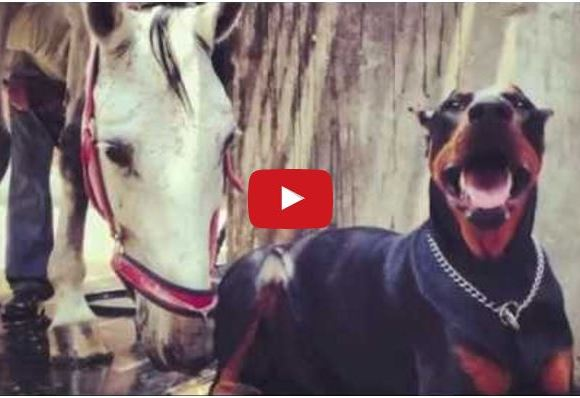 "They Call This Dog The ""Horse Whisperer"" – Wait Till You See What He Can Do!"