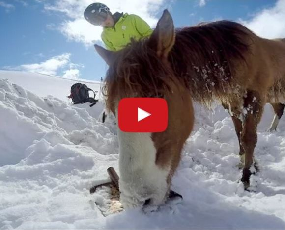Snowboarders Found A Horse Freezing To Death On A Mountain….What They Did Next Is Amazing!