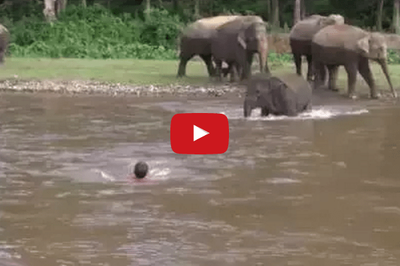 Baby Elephant 'Rescues' The Man Who Saved Her – Beautiful!