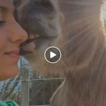 Rescue Donkey Loves To Give Kisses