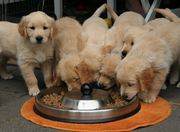 9 Dog Food Brands Recalled for making dogs violently ill