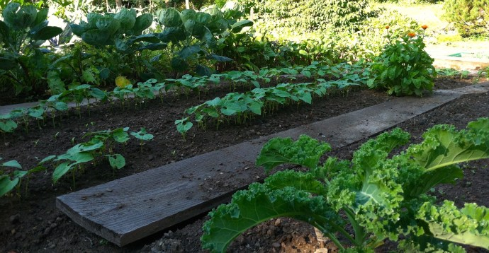 5.jardin potager_photo 3