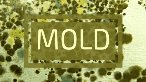 Things you should know about mold inspection