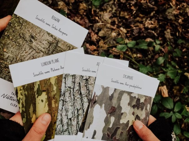 nature identification cards from a nature subscription box