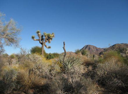 http://en.wikipedia.org/wiki/File:Living_desert.JPG