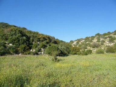 http://en.wikipedia.org/wiki/File:Valley_of_Elah-Med_woodland.jpg
