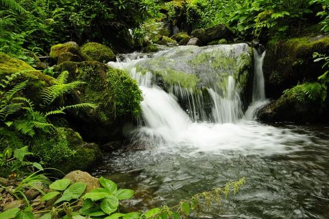 http://commons.wikimedia.org/wiki/File:Waterfall_in_Mtirala_National_Park.JPG
