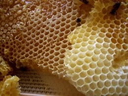 http://commons.wikimedia.org/wiki/File:Honey_comb.jpg