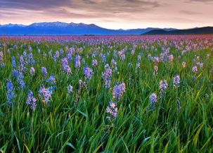 https://commons.wikimedia.org/wiki/File:Sunrise_at_Camas_Prairie_Centennial_Park.jpg