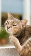 https://commons.wikimedia.org/wiki/File:Cat_scratching.jpg