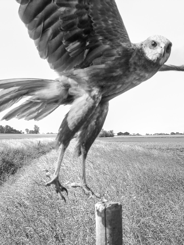 knausgaard-birds07