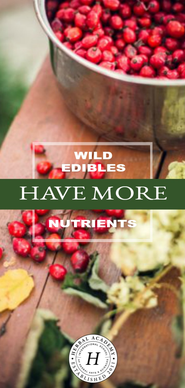 Wild Edibles Have More Nutrients | Herbal Academy | Wild edibles have more nutrients, let us taste the seasons in the most literal way we can, decrease our dependence on large agro-businesses, and benefit the environment. Learn more about wild edibles in this post!