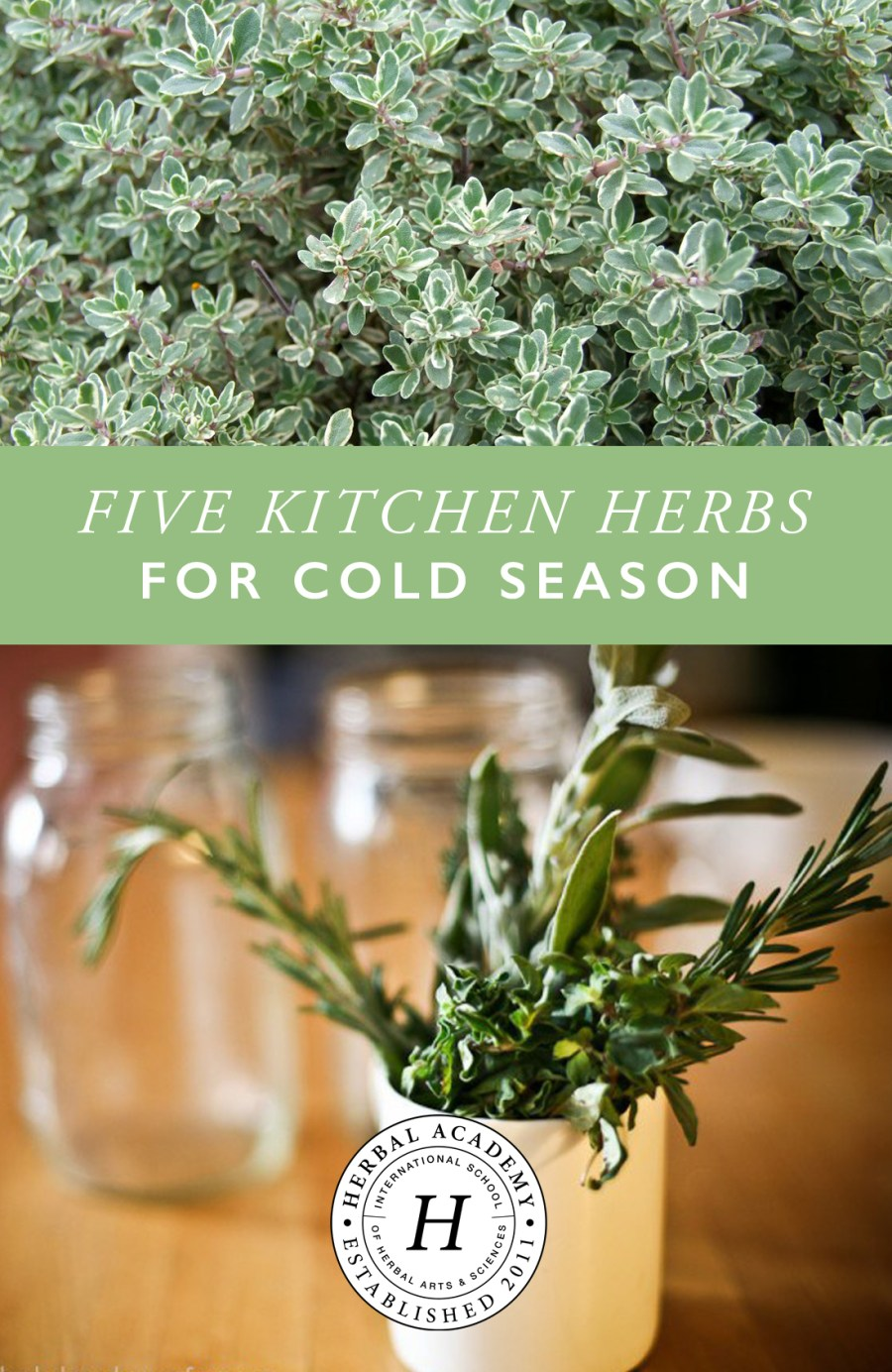 FIVE KITCHEN HERBS FOR COLD SEASON