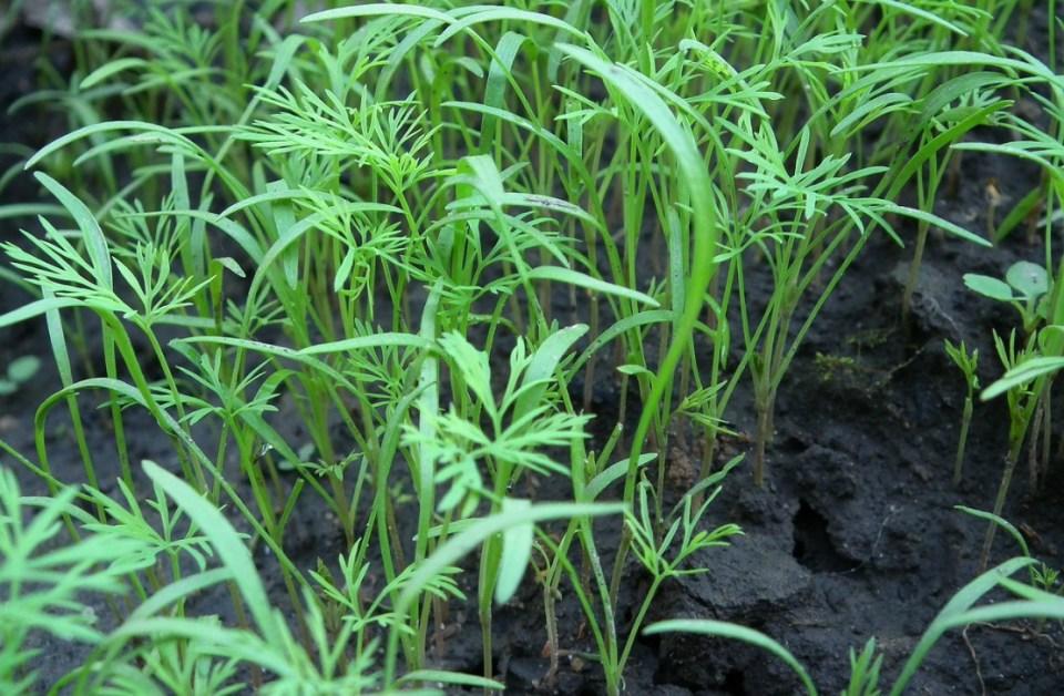 How to Harden Seedlings