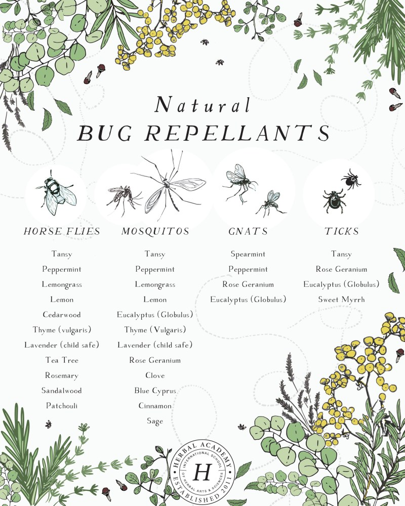 Crafting a Natural Bug Repellent with Essential Oils | Herbal Academy | I have enjoyed crafting my own natural bug repellent for me and my family with essential oils for years and with great results. Recipes included!