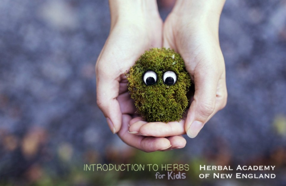 25 Free Herbal Resources To Help You Grow As An Herbalist | Herbal Academy | Enjoy these free herbal resources such as books, ebooks, magazines, and research aids as you continue to grow as an herbalist.