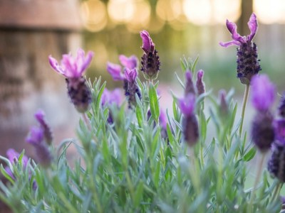 7 Things to Keep in Mind When Planning Your Herb Garden   Herbal Academy   Keep these things in mind when planning your herb garden. Herb gardens are a wonderful way to use fresh herbs when cooking and making home remedies!