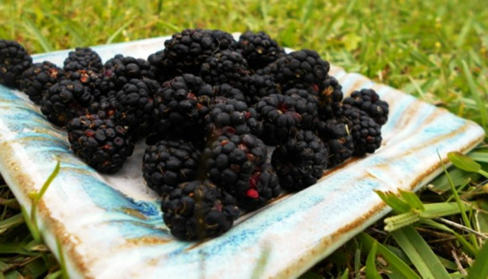 Health-Benefits-of-Dewberry-and-Dewberry-Syrup