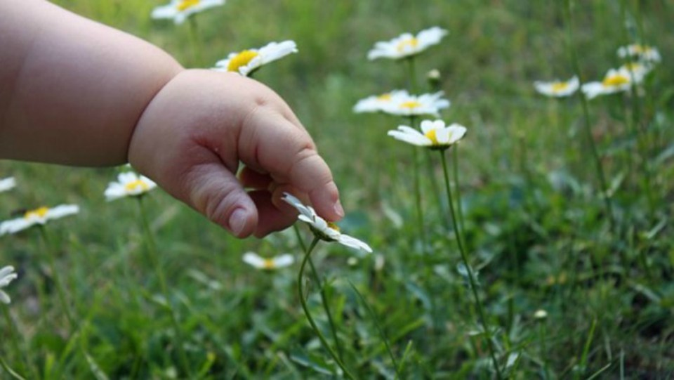 Choosing Safe Herbs for Your Kids - Herbal Academy