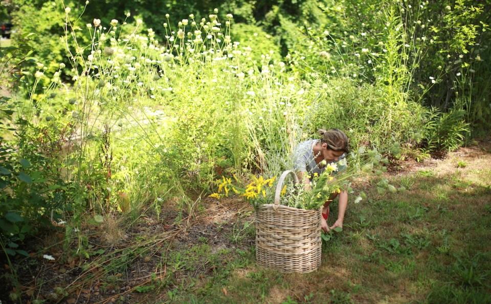 How to Begin Your Herbalist Training - wildcrafting