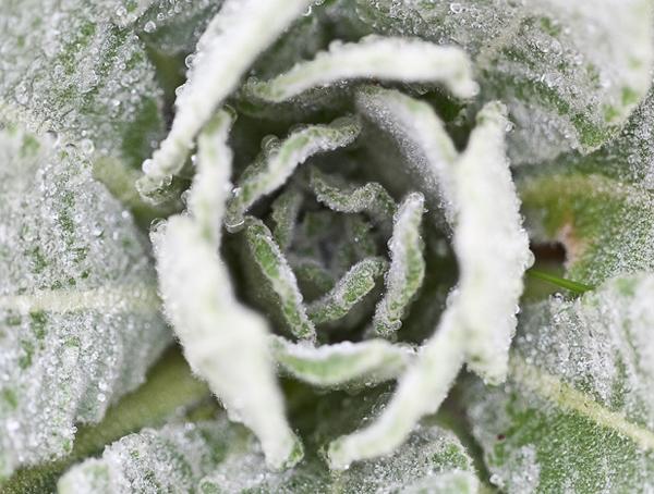 Advanced Herbal Studies - Herbal Healing Lesson at the Herbal Academy