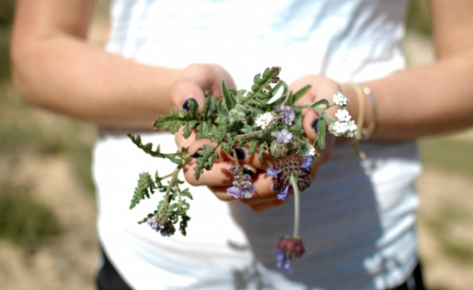 Stocking the Family Herb Cabinet (Family Herbal Summer Series: Part 4) | Herbal Academy | Stock your family herb cabinet with remedies you make together! Also enjoy using simples as a family.