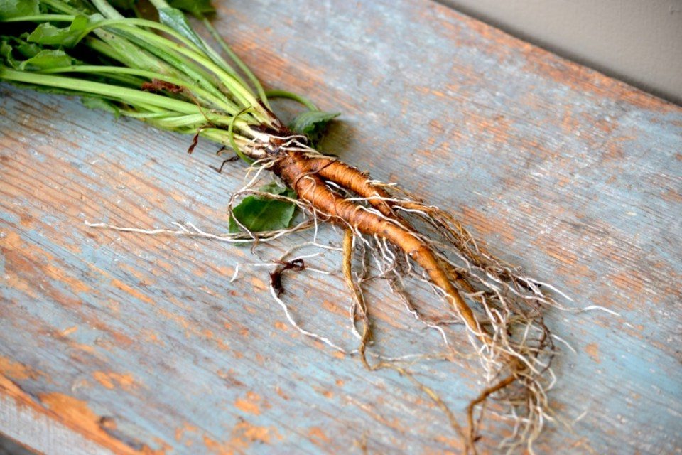 Creating a Local Materia Medica with Yellow Dock   Herbal Academy   Come learn about yellow dock and how to create your own local materia medica with it this month!