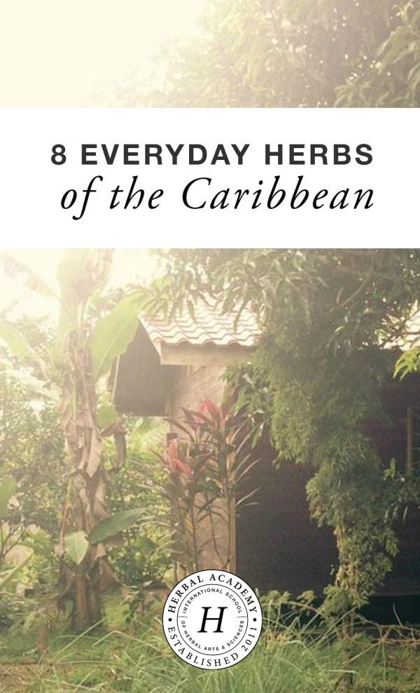 8 Everyday Herbs of the Caribbean – Herbal Academy