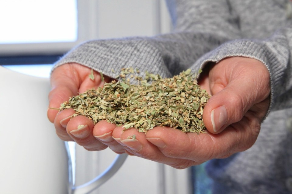 Herbs and the Chronic Pain Puzzle | Herbal Academy | Those suffering from chronic pain should consider each piece of the chronic pain puzzle when they want to add supportive herbs into their life.