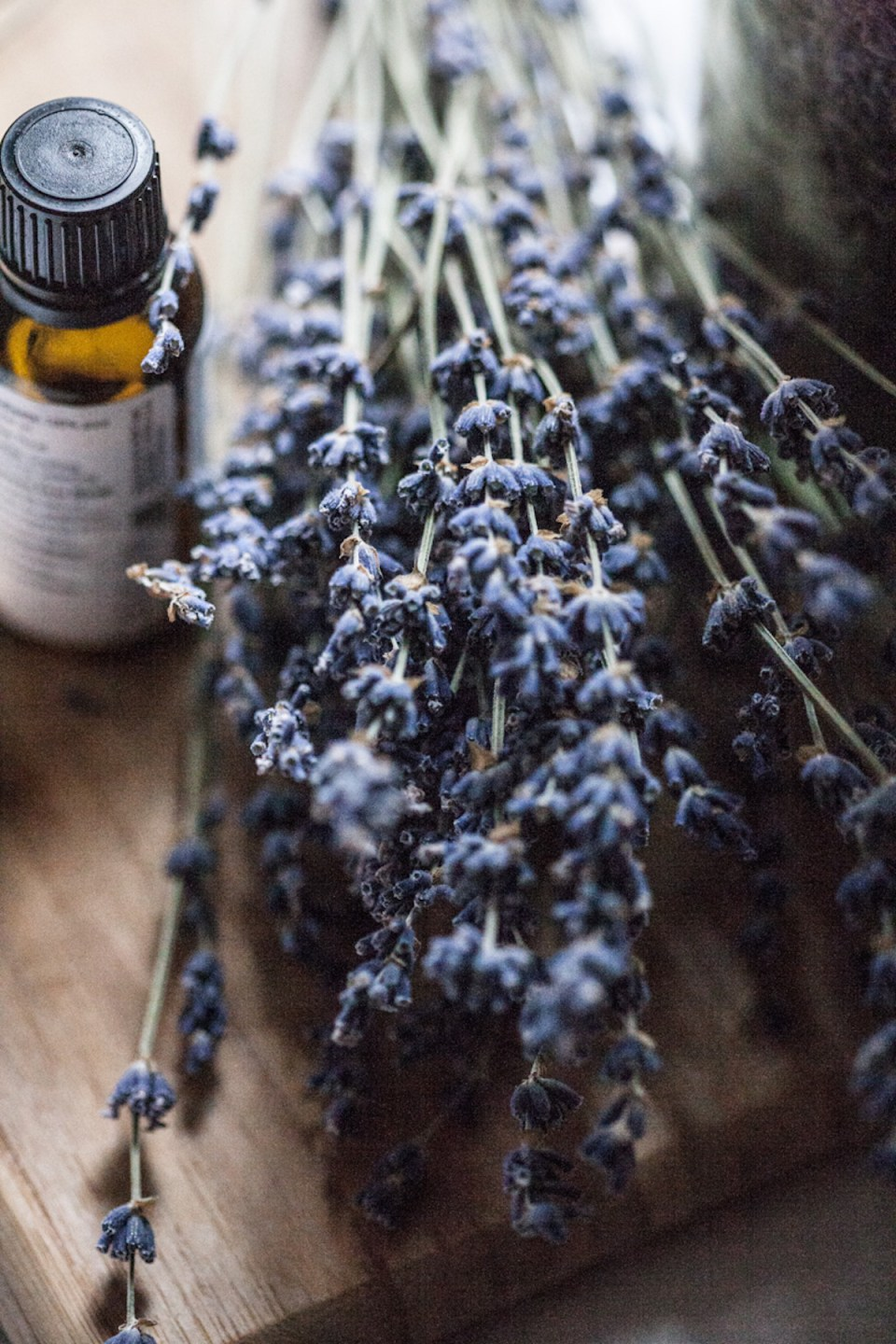 Lavender Essential Oil: A Must-Have For Every Natural Medicine Chest | Herbal Academy | Learn all about lavender essential oil and how to use it safely in your home and for your family's health.