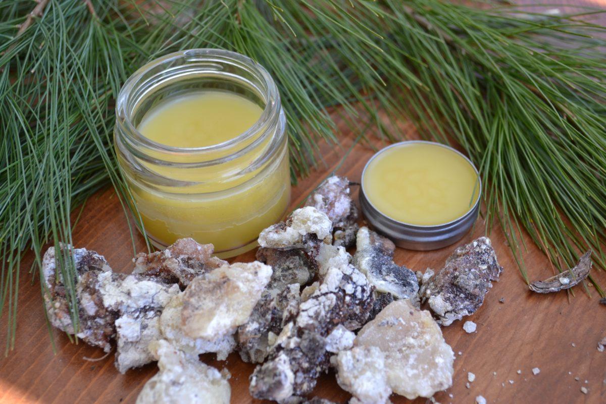 How To Make Pine Resin Salve – Herbal Academy