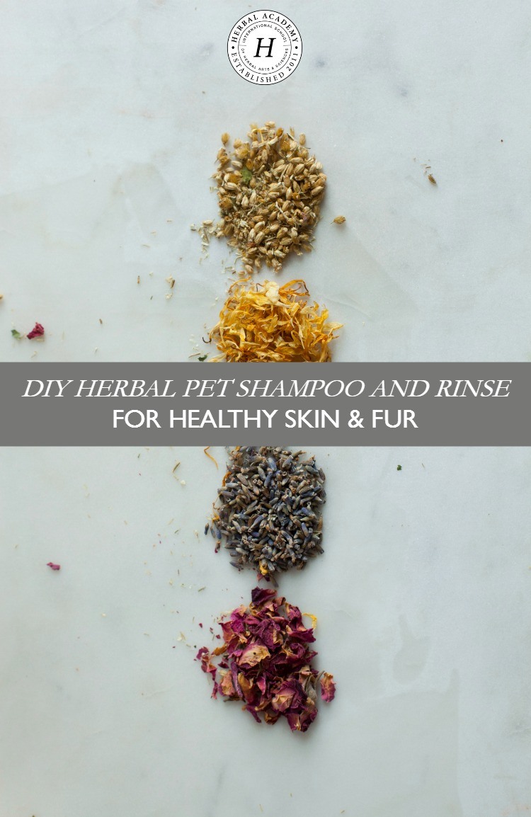 DIY Herbal Pet Shampoo and Rinse for Healthy Skin & Fur | Herbal Academy | To help keep your furry friends clean and healthy, here's a simple herbal pet shampoo and rinse to help maintain a healthy coat!