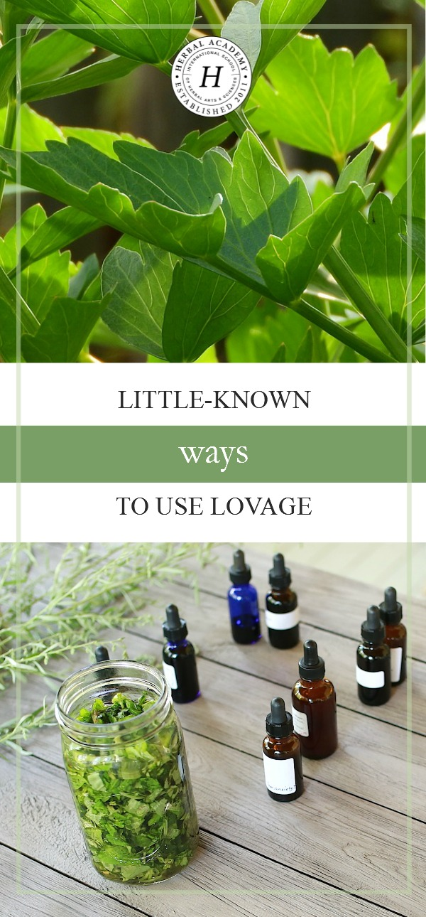 Little-Known Ways To Use Lovage | Herbal Academy | Join us as we explore some of the little-known ways to use lovage!