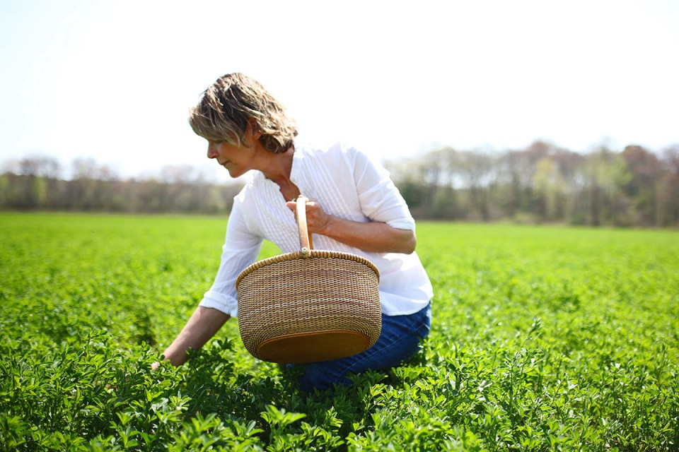How to be an Environmentally Sustainable Herbalist | Herbal Academy | Here are 4 ways you can be an environmentally sustainable herbalist by being mindful of where plants we use come from and how they are grown.