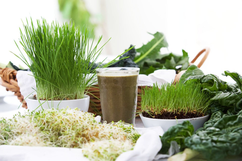 6 Steps To Revitalize Your Health With Herbs This Spring | Herbal Academy | Spring is an ideal season to start a new routine, and we have 6 steps to help you revitalize your health with herbs this spring season!