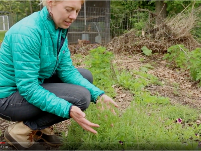 Learn To Identify Cleavers In Our Newest Plant Walk Video | Herbal Academy | Join us on the plant walk video all about cleavers!