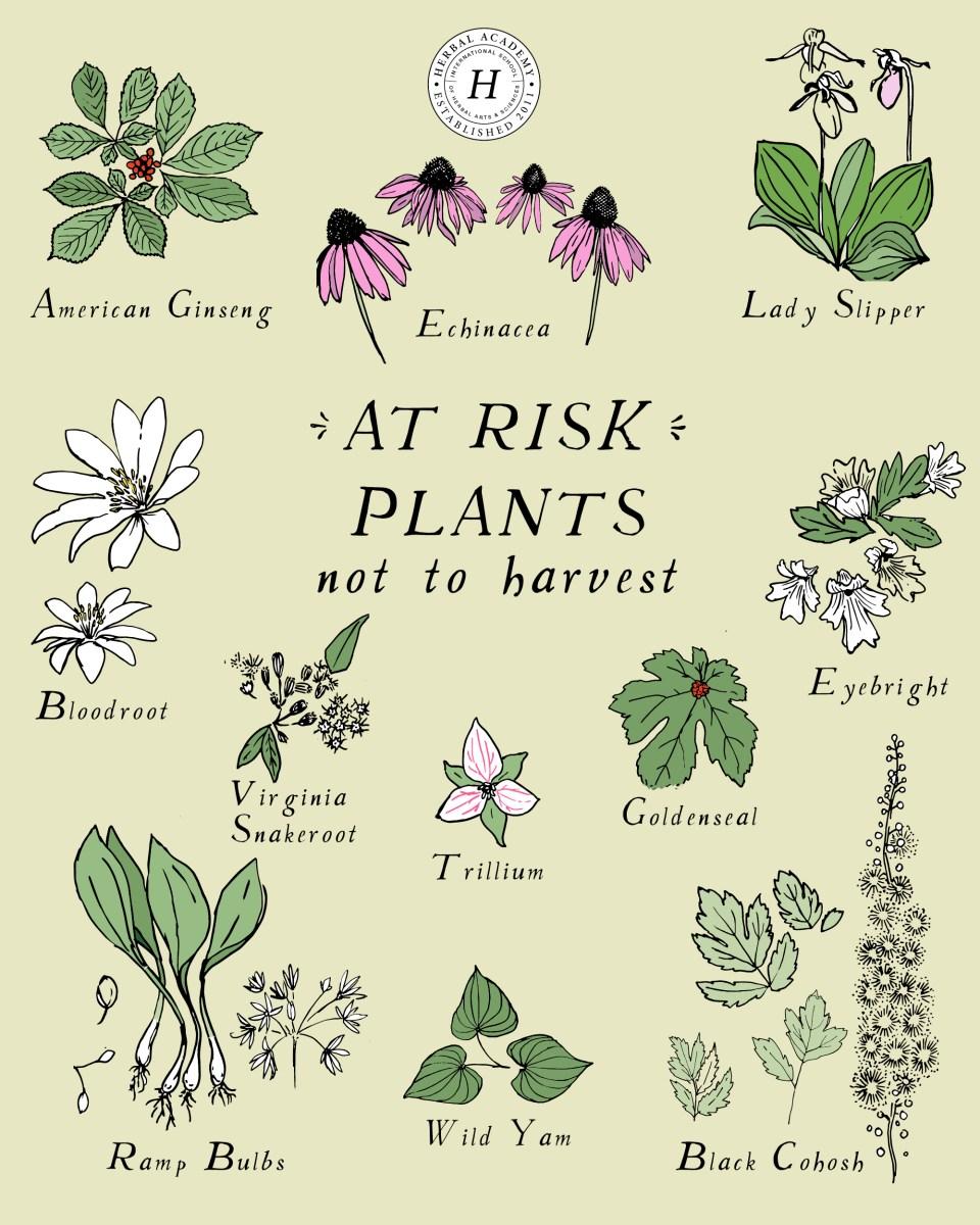 illustration of at-risk plants