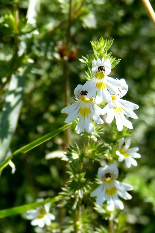 12 At-Risk Plants NOT To Harvest This Year   Herbal Academy   Late spring and summer are ideal times to harvest many plants, but these 12 at-risk plants should be avoided.