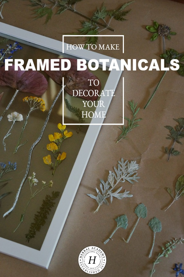 How To Make Framed Botanicals to Decorate Your Home   Herbal Academy   Bring plants into your home in a whole new way by decorating your walls with framed botanicals. Get the steps and details here.