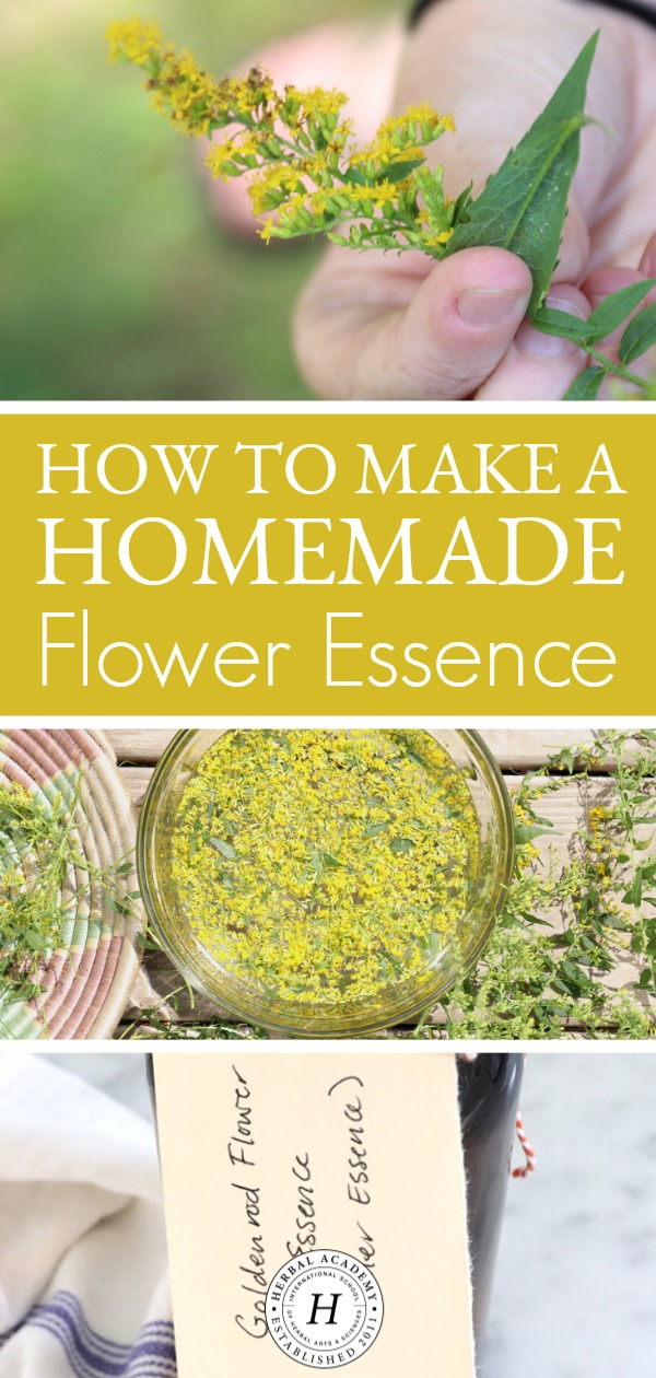 How To Make A Homemade Flower Essence | Herbal Academy |Here's a step-by-step guide on how to make your own homemade flower essences this year!