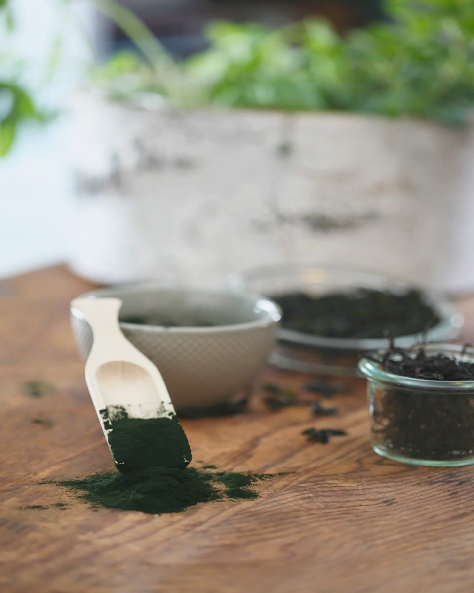 Seaweed 101: What You Need To Know | Herbal Academy | Seaweed can be a nutritive, wellness-promoting, and tasty addition to your herbal formulas, diet, and self-care routine! Read on to learn more!