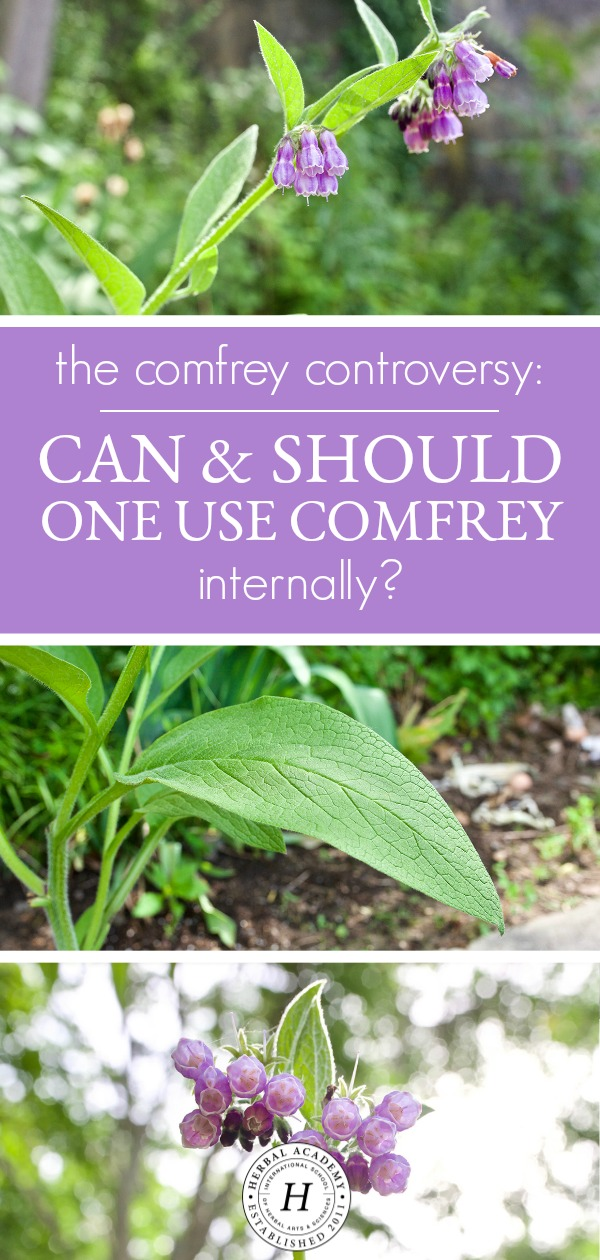 The Comfrey Controversy: Can And Should One Use Comfrey Internally? | Herbal Academy | Should you use comfrey internally? This article will explore the benefits, traditional uses, and safety of comfrey to answer this commonly debated question.