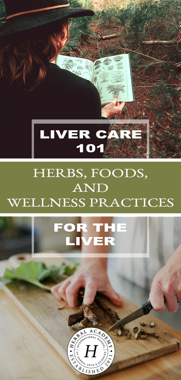 Liver Care 101: Herbs, Foods, And Wellness Practices For The Liver | Herbal Academy | The importance of holistic liver care cannot be underestimated. Here are some key herbal, dietary, and lifestyle practices to help support your liver.