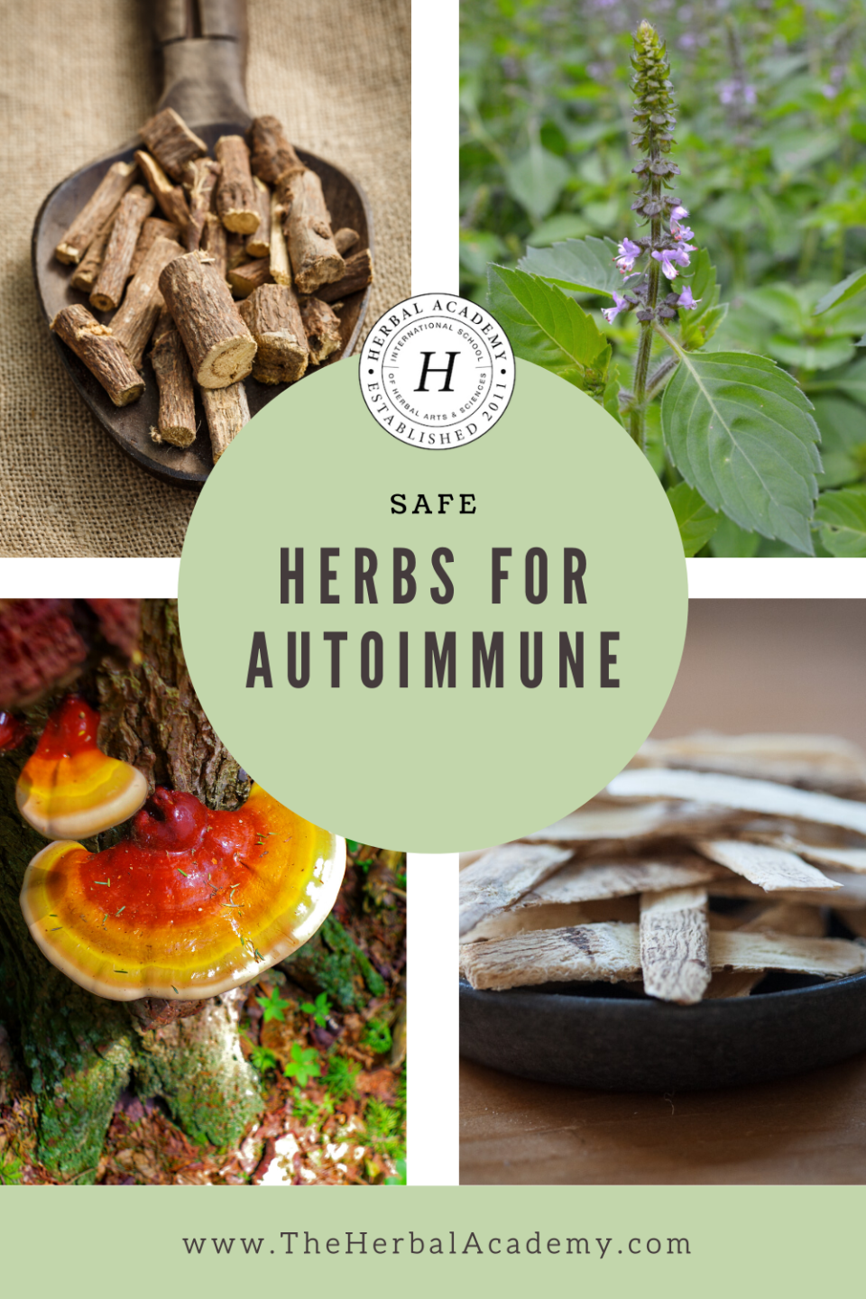 Safe Antiviral Herbs for Autoimmune Disease   Herbal Academy   Finding immune-supportive, antiviral herbs for autoimmune disease requires an extra layer of care and research by the individual or practitioner.