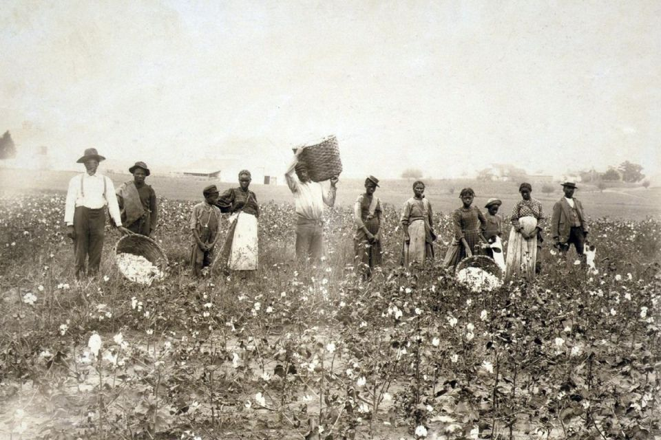 A black-and-white photo of slaves working in a cotton field.