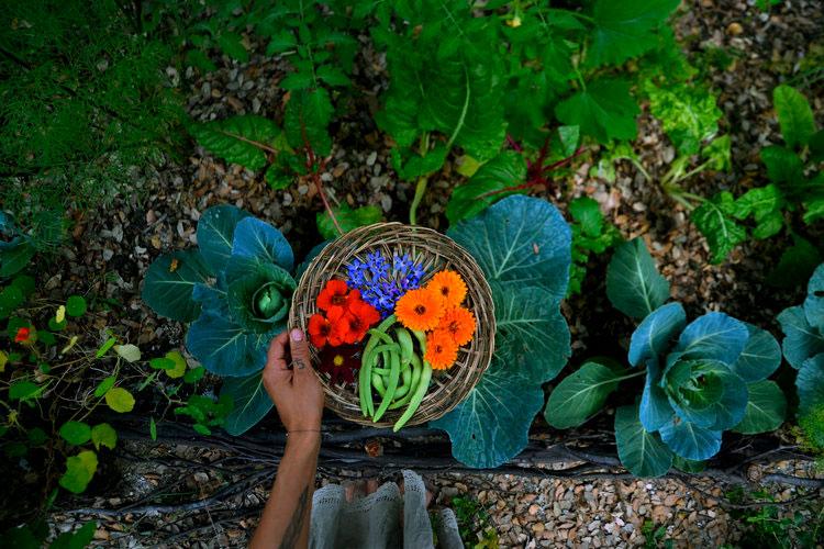 Cat Seixas' garden bounty